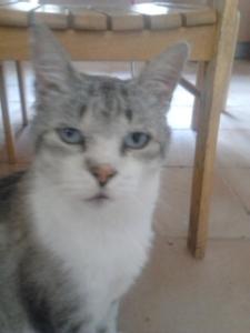 Sebastião em 2015-05-01