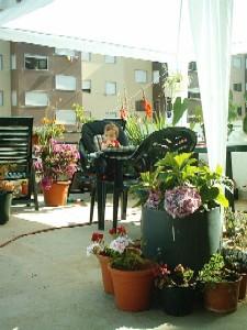 Mesa no meio das flores