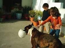 Pedro e Gaby brincam com Gontal no terraço