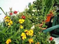 Vasos cheios de flores no quintal sul