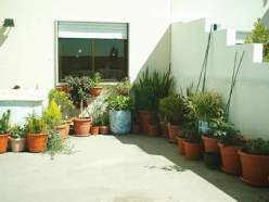 Vasos no quintal sul da casa do Montijo