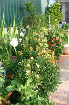 Flores no quintal sul da casa do Montijo